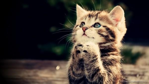 Котик просит задачек