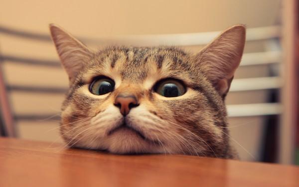 Котик ждет задачек